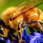 طرح های توجیهی پرورشهای زنبور عسل