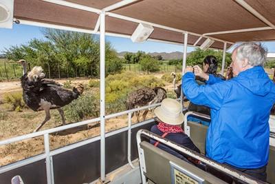 آموزش پرورش شتر مرغ