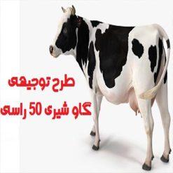 طرح ۵۰ راسی گاو شیری