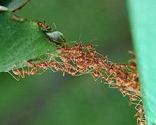 پاورپوینت درمورد الگوريتم کلونی مورچه ها