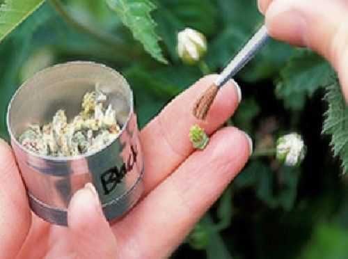 پاورپوینت درمورد اصلاح گیاهان دارویی