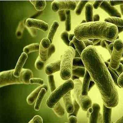 پاورپوینت مقاله پروبیوتیک ها و پری بیوتیک ها