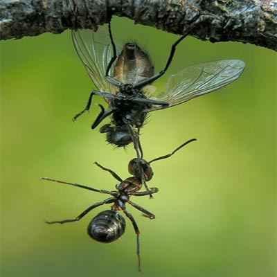 دانلود طرح جابر مورچه