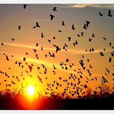 دانلود طرح جابر مهاجرت پرندگان