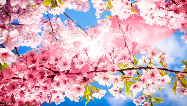 دوران طلایی مطالعه نوروز فصل بهار