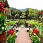 طراحي باغ