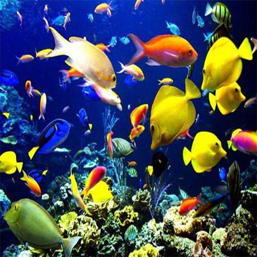 شرکت تولید ماهیان تزئینی