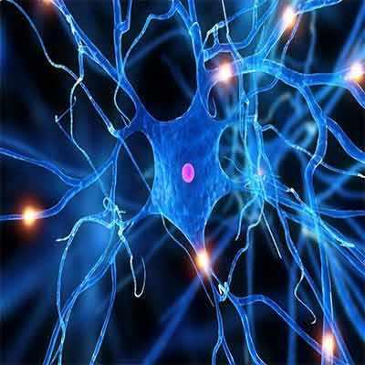پاورپوینت دانلود جزوه انعطاف پذیری عصبی