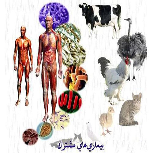 بیماریهای مشترک بین انسان و دام