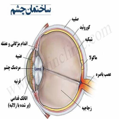 تحقیق در مورد ساختمان چشم انسان