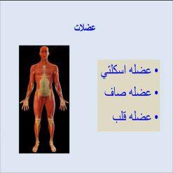 عضلات اسکلتی و صاف