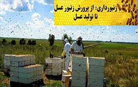 طرح توجیهی نگهداری و پرورش زنبور عسل
