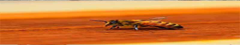زنبورهای عسل آفات و بیماری های زنبور عسل