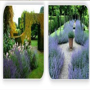 استفاده از گیاهان دارویی در طراحی فضای سبز شهری