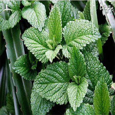 تحقیق در مورد آشنایی با خواص برخی از گیاهان دارویی