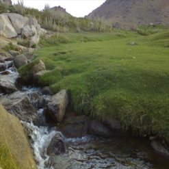 تحقیق در مورد تنوع گياهي و پراكنش گياهان دارويي استان همدان