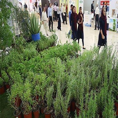 تحقیق در مورد معرفي گياه دارويي و پراكنش آن در استان آذربايجان شرقي