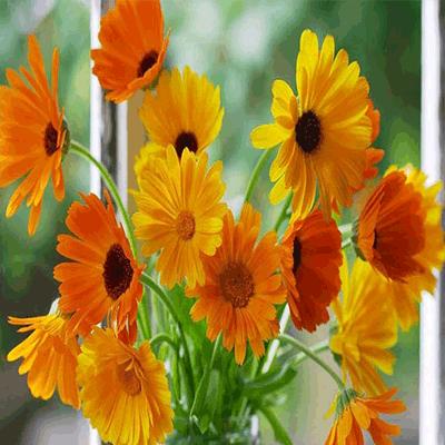 تحقیق در مورد گل همیشه بهار